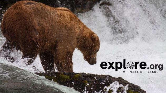 Explore una excelente web para ver animales en vivo y en directo.