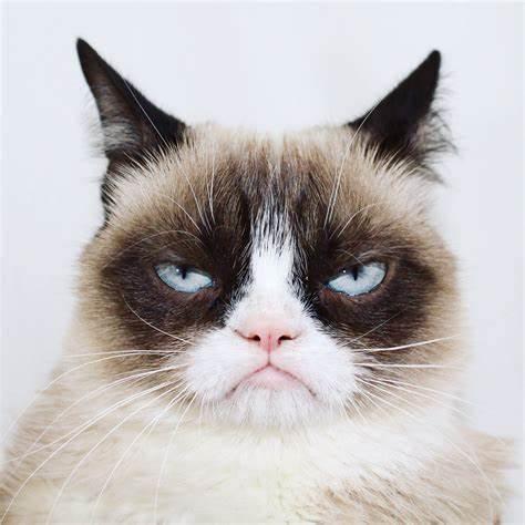 Grumpy Cat: muere la gata protagonista de muchos memes